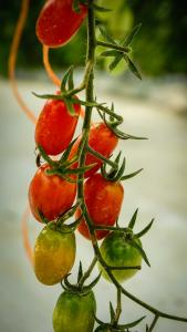 PR Tiene Tomates 1